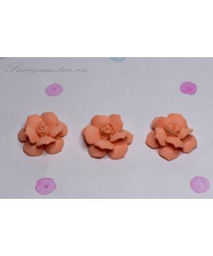 Розы маленькие абрикос
